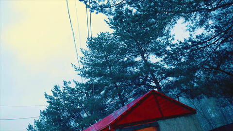 Trees in a park at the sky background 영상물