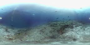360 vr a coral reef in Philippines VR 360° Video