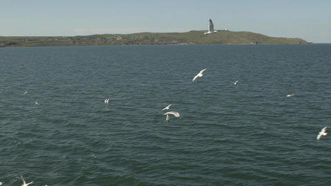 Many Flying Seaguls At The Sea Footage