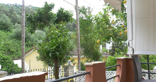 Windy Knocking Down Branches In The Orchard With Lemon Seen From The Terrace Of stock footage