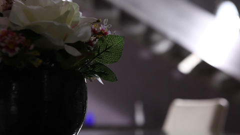 Micro shot of the Flowers Footage