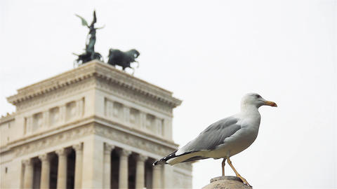 Seagull in Rome, Close Up Live Action