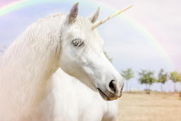 Unicorn3 Photo