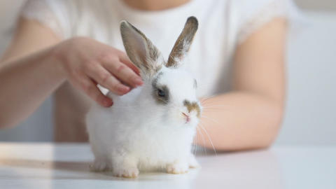 Little girl carefully stroking small fluffy bunny, children dreams, pet adoption Footage