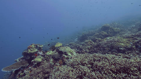 Underwater landscape fish swimming over coral reef on sea bottom. Sea fish Footage