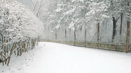 Falling snow in snowing weather in backyard with fence, house, forest Footage