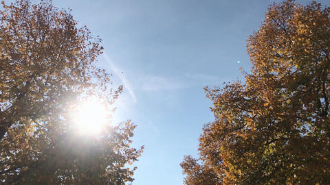 Fallen Leaves and Autumn Trees in Slow Motion ビデオ