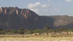 A herd of elephants heading to a waterhole in a dry area Footage