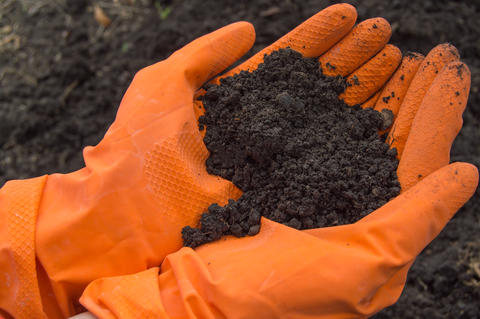 Soil samples in the hands of a biologist in orange gloves. Investigation of the フォト