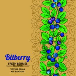 bilberry vector background Vector