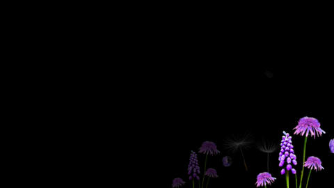 PURPLE WILD FLOWER AT DUSK, Stock Animation
