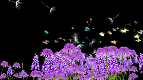 PURPLE WILD FLOWER AT DUSK Animation
