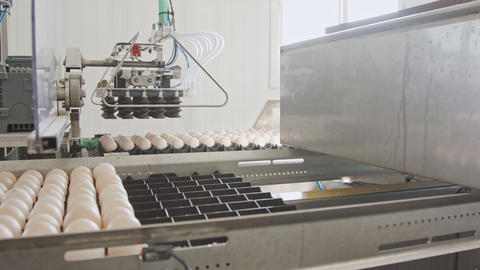 Machine sorting fresh eggs in a chicken farm Stock Video Footage