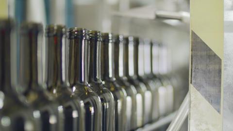 Filling of olive oil bottles in a bottling factory Live Action