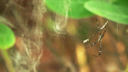 spider on the web Footage