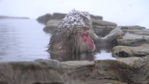 Monkey rest in the hot spring Footage