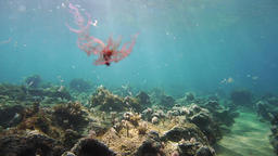Underwater in strong current, slow motion Footage