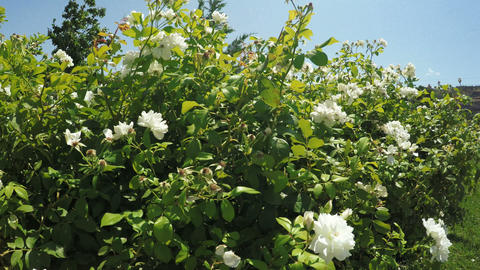 Flower Garden in city park Footage