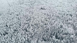 Aerial view: winter forest. Snowy tree branch in a view of the winter forest Footage
