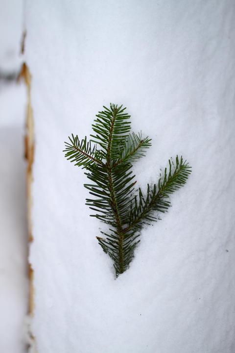 Under The Snow In A Winter Day Fotografía