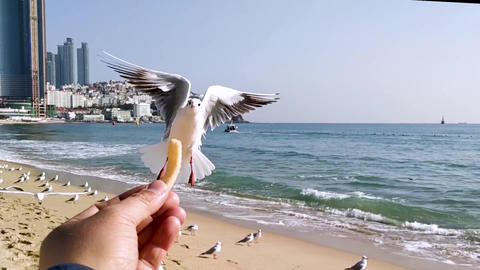 Seagull Eat Snack 0