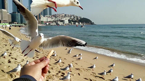 Seagull Eat Snack 1