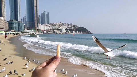 Seagull Eat Snack 2