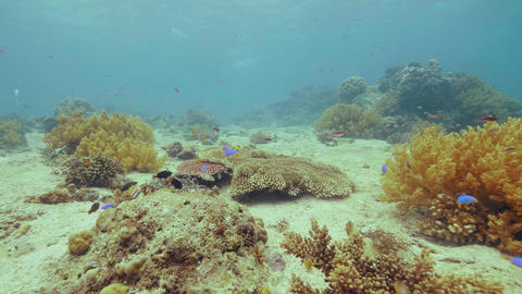 Exotic fish swimming near coral reef on sea bottom. Underwater landscape Footage