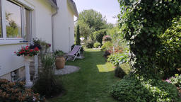 Sunny Backyard Garden With Lush Green Plant Life Footage