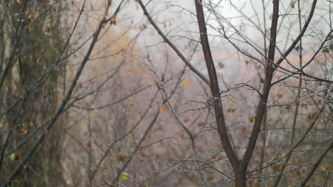 Dull autumn scene of bare trees and snow with rain Footage