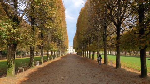 Autumn scene of tree lined promenade in Luxembourg Gardens, Paris Live Action