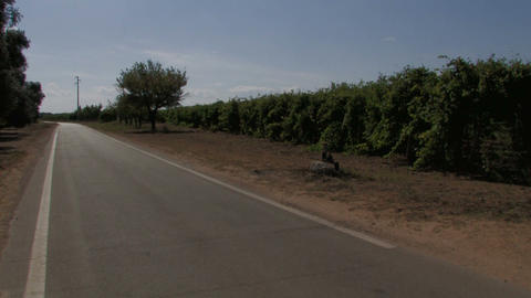 Country road and grape vines Stock Video Footage