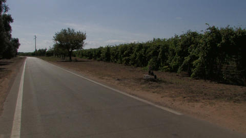 Country road and grape vines Footage