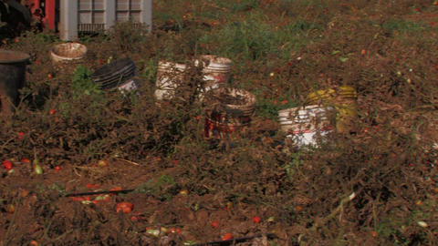 Buckets waiting to be filled with tomatoes Stock Video Footage