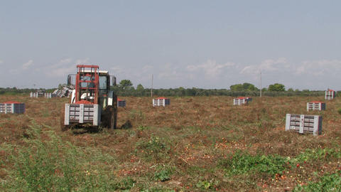 Tractor moving crates of tomatoes Stock Video Footage