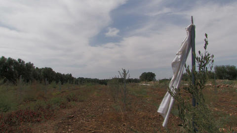 White cloth and field Stock Video Footage