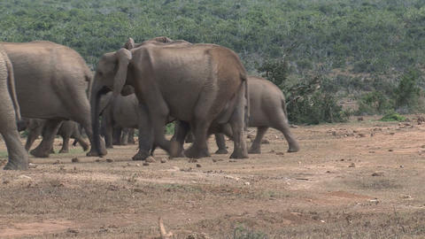 Elephant group Stock Video Footage