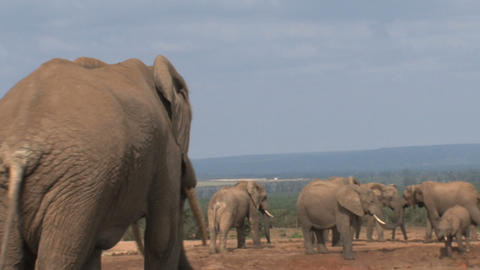 Big male elephant Stock Video Footage