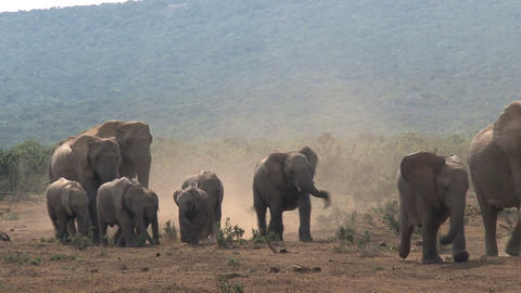 Amazing group elephants Stock Video Footage