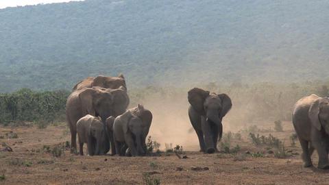 Amazing group elephants Stock Video Footage
