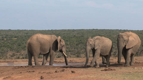 Group elephant family Stock Video Footage