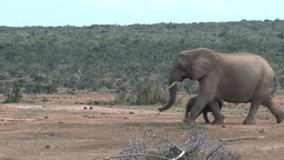Group little elephants Stock Video Footage