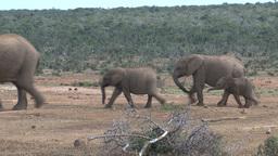 Group little elephants Stock Video Footage