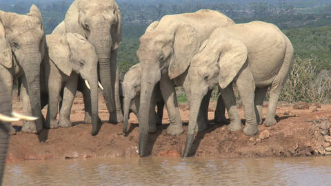 Big elephant Stock Video Footage