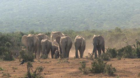 Big group elephants Stock Video Footage