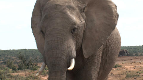 Close up from big elephant Stock Video Footage