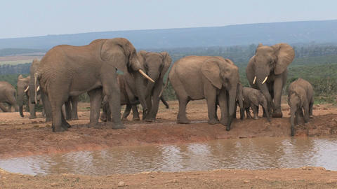 Group elephants famlily Stock Video Footage