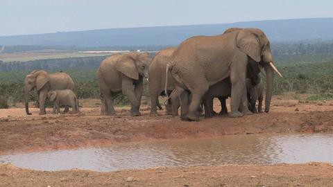 Group elephants famlily Stock Video Footage