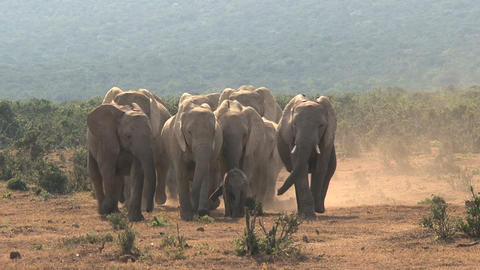 Big group elephants Stock Video Footage
