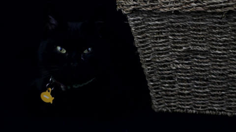 Black cat resting Stock Video Footage